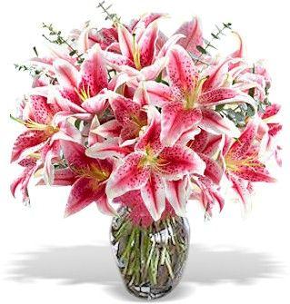 Stargazer Lilies Lily Flower Stargazer Lily May Birth Flowers