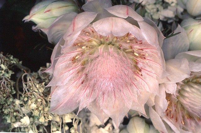 Nobuyoshi Araki - Flowers - Flower Rondeau, 1997