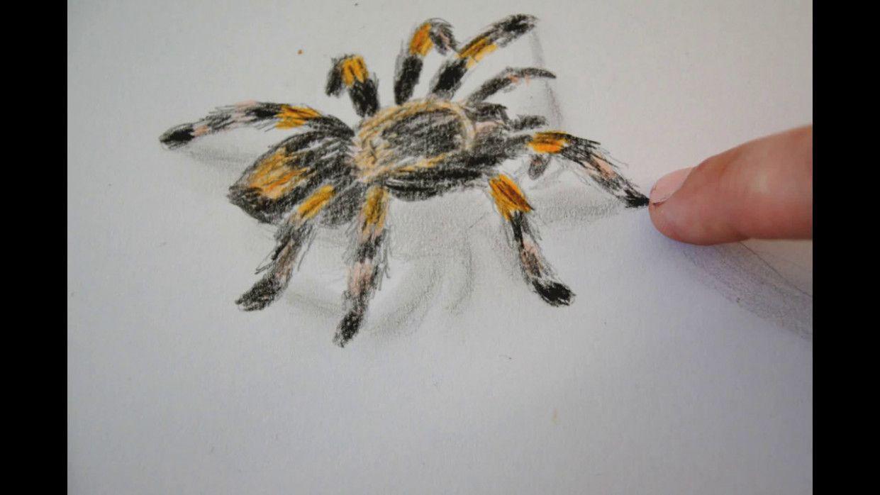 insekten malvorlagen video  tiffanylovesbooks