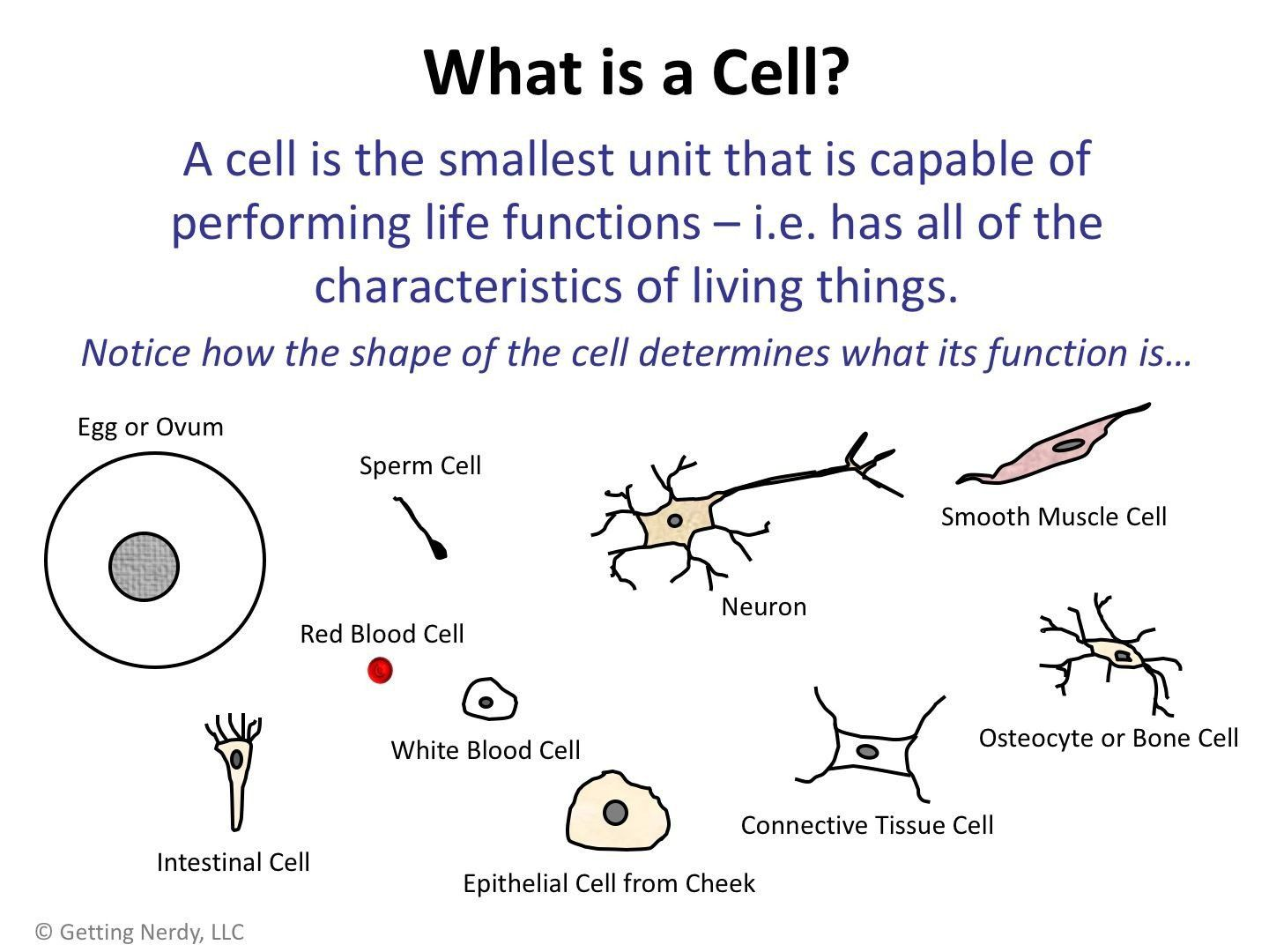 Cell Theory Worksheet 7th Grade Lesson Plan Robert Hooke S Contributions To Cells And The 2020