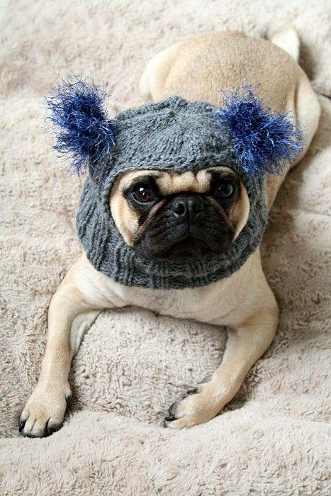 Awww Cute Hat Dog Beanie Pugs Dog Hat
