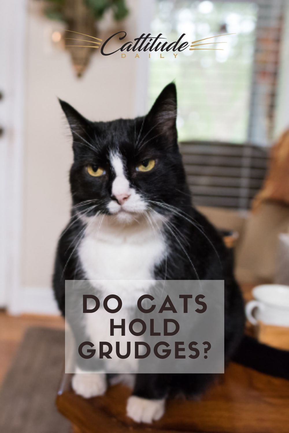 Do Cats Hold Grudges Or Behave Out Of Spite In 2021 Cat Behavior Cats Cat Care