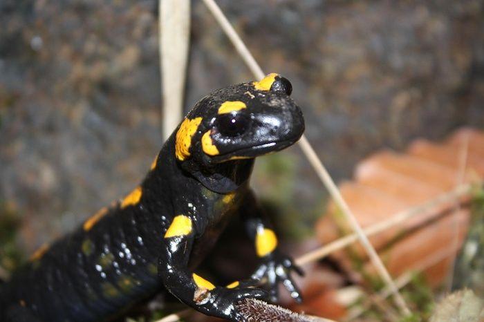 Terza salamandra - Photos [hikr.org]