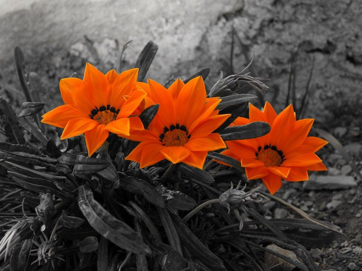 Pin by astghik atayan on flowers pinterest flowers