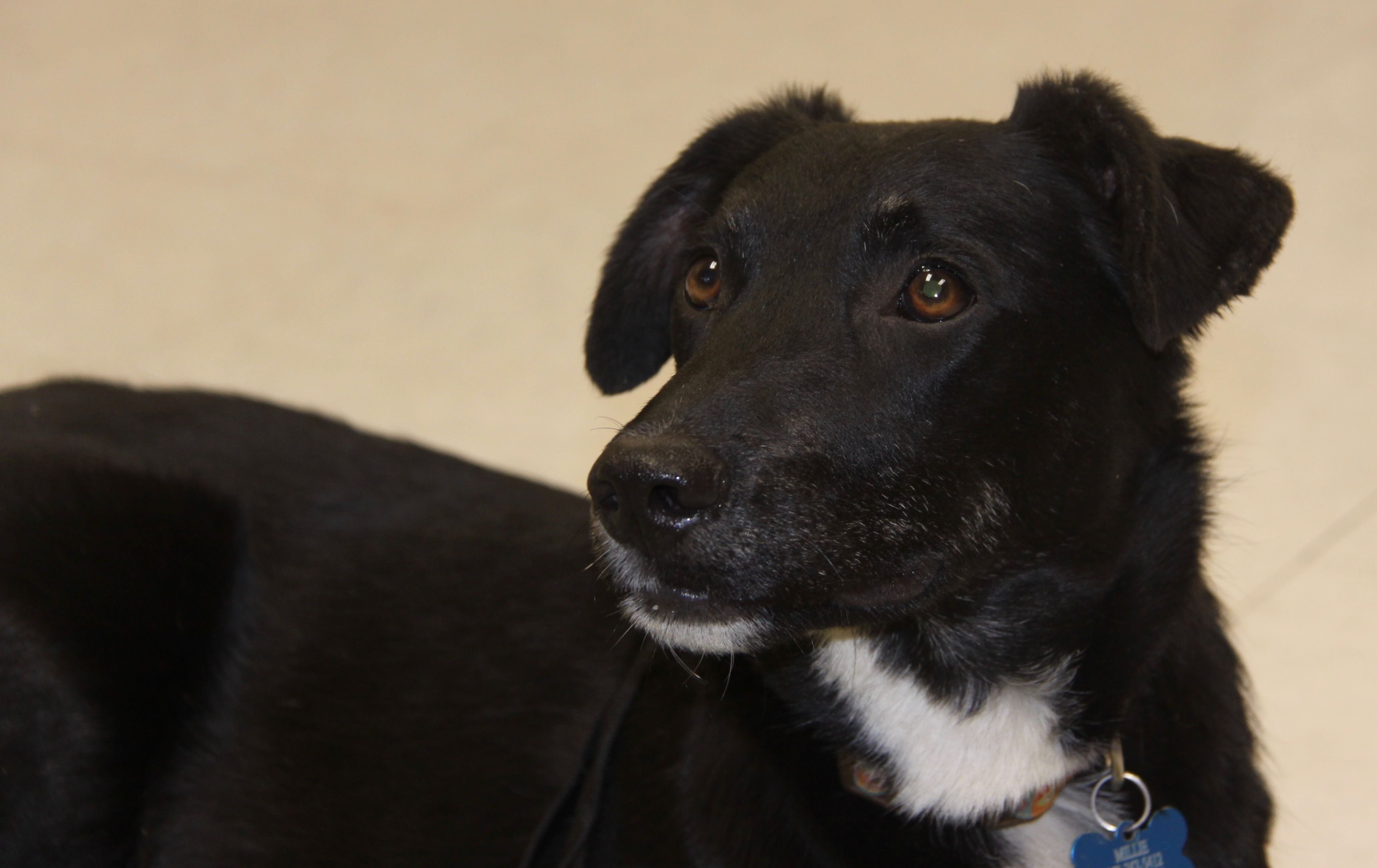 Adopt Trudy on Dogs, Animal rescue, Animals