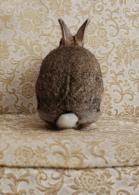 """""""I hold that a strongly marked personality can influence descendants for generations.""""  ― Beatrix Potter"""