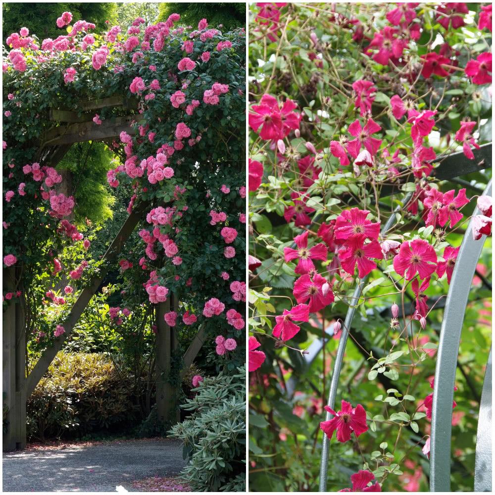 Dlugo Kwitnace Krzewy Ogrodowe Plants Red Peppercorn Red