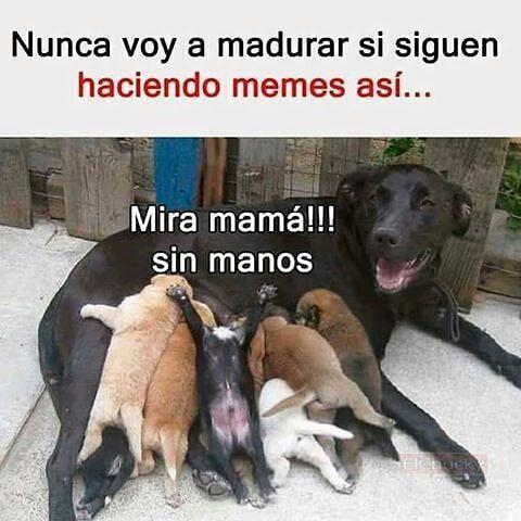 Jajajaja Humor Divertido Sobre Animales Memes De Perros Chistosos Meme Gracioso