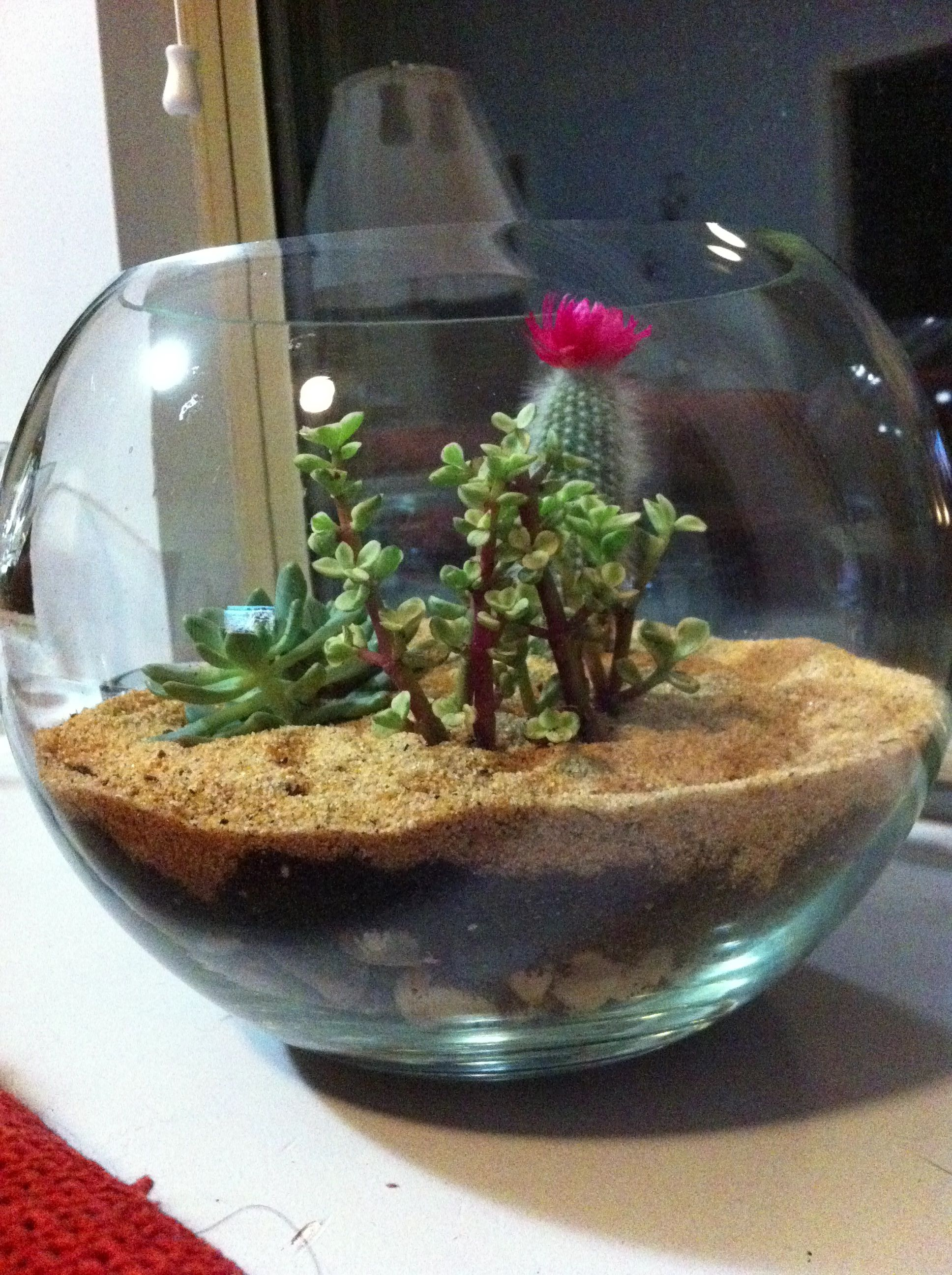 Succulent Terrarium Two Inches Of Gravel Or Rocks Layer Of