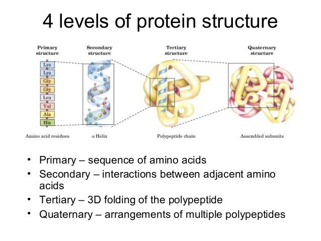 4 levels of protein structure  • Primary – sequence of amino acids • Secondary – interactions between adjacent amino acids...