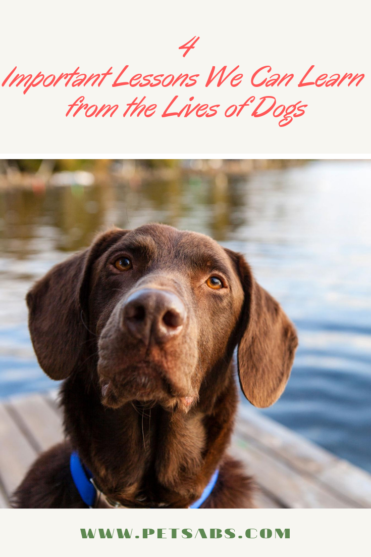 4 Important Lessons We Can Learn From The Lives Of Dogs Dogs Lesson Pet Parent