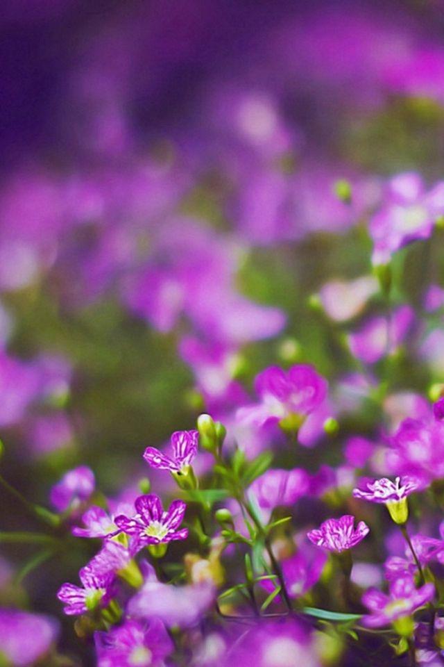 Nature Purple Flower Field Garden Bokeh View Iphone 4s Wallpaper Download Iphon Flower Iphone Wallpaper Purple Flowers Wallpaper Beautiful Flowers Wallpapers Flower garden background images download