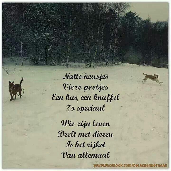 dierenliefde spreuken Dierenliefde | teksten   Quotes, Dog quotes en Dogs dierenliefde spreuken