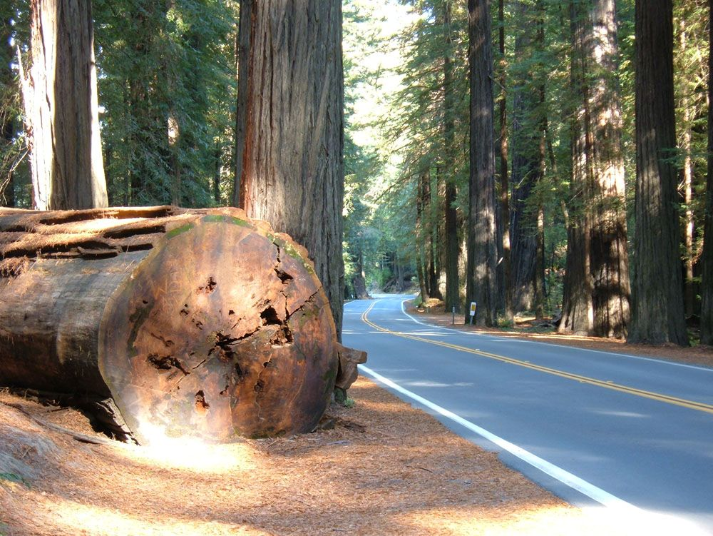 A beautiful drive through the redwoods. Avenue of the Giants, Humboldt County CA. Photo courtesy Best Western Country Inn Fortuna.  http://bwcountryinnfortuna.com/