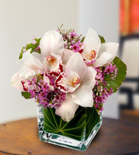 Orchids For Mom Flowers Delivered Orchids Flower Delivery
