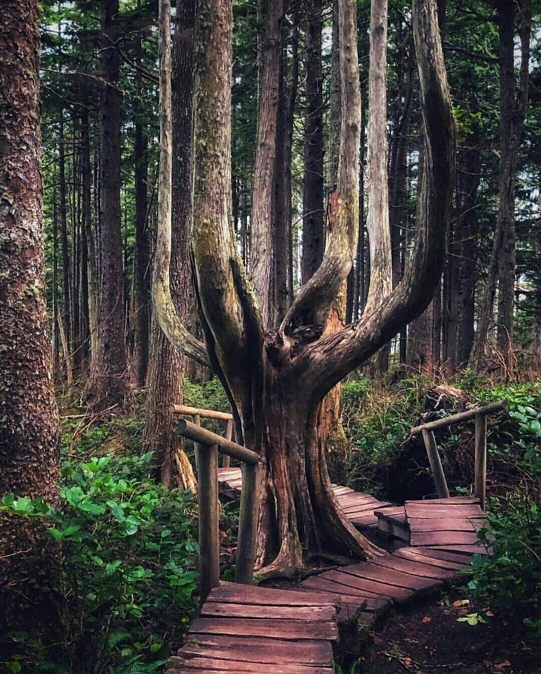 Landscape Photography Trees