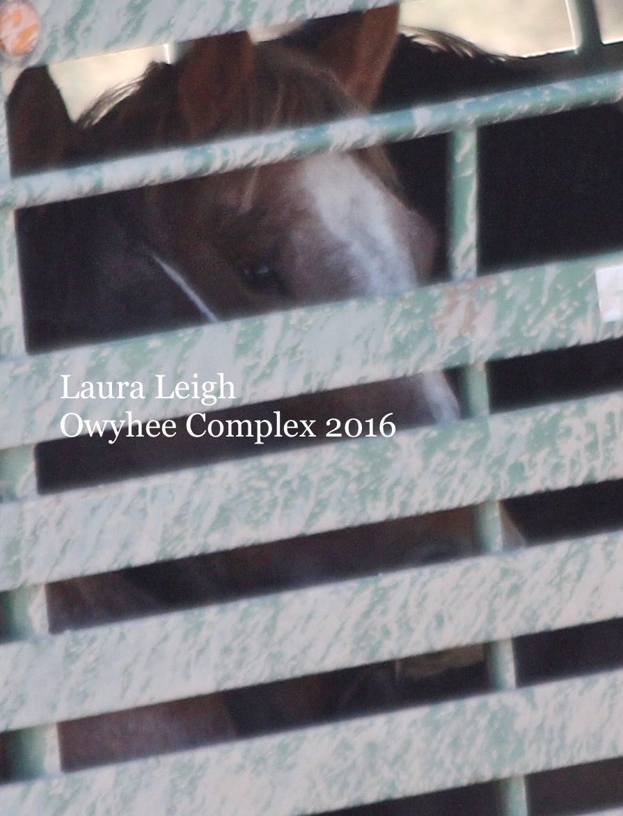 11/10/2016No access at trap. We were told there would be a couple of runs to remove off HMA horses and then trap would move. We sat at holding and watched about 100 horses come off the range. Often…