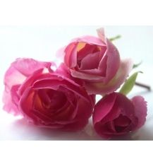 Beautiful skin with the beauty of rose | Argital Australia http://www.argitalaustralia.com.au/beautiful-skin-beauty-rose