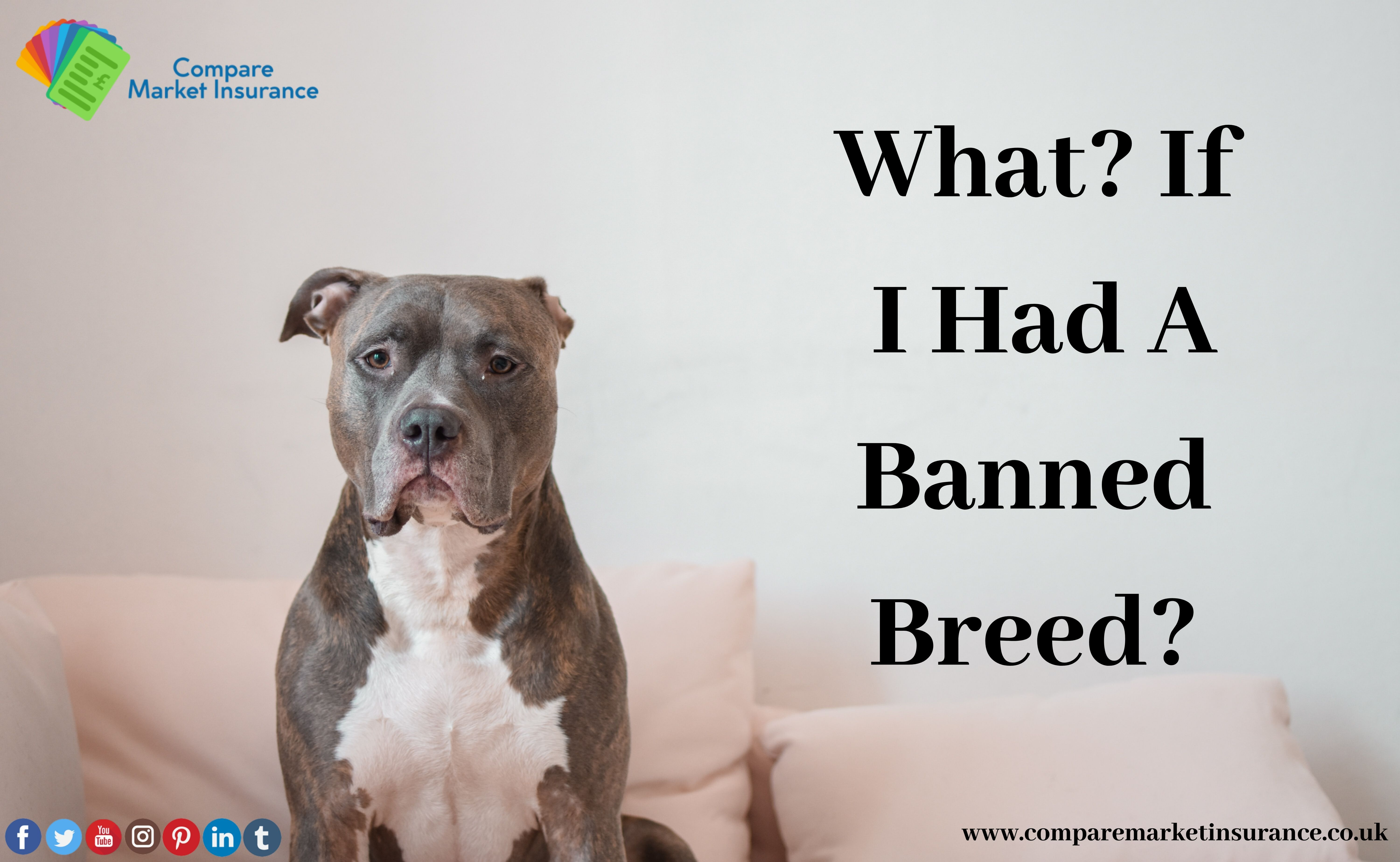 Save From Banned Dogs What If I Had A Banned Breed Do You Have