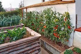 bildergebnis f r tomaten abdeckung selber bauen garten gem segarten garten und hochbeet. Black Bedroom Furniture Sets. Home Design Ideas