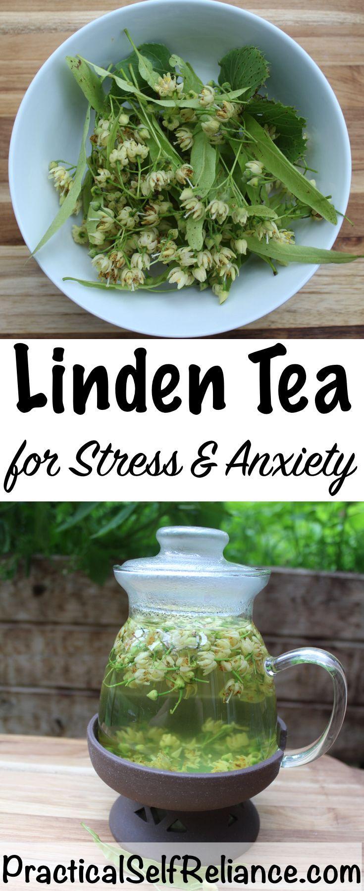Linden tea medicinal benefits in 2020 herbal teas