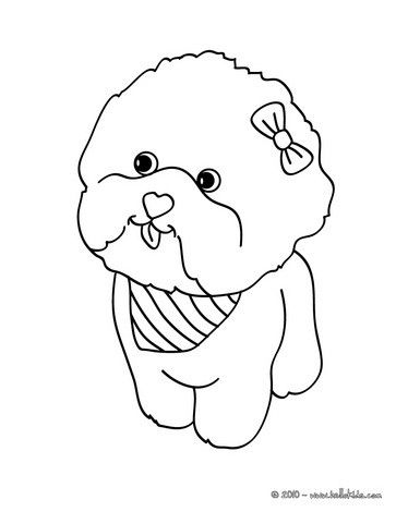 Maltese Dog Puppy coloring page for kids Add some colors to