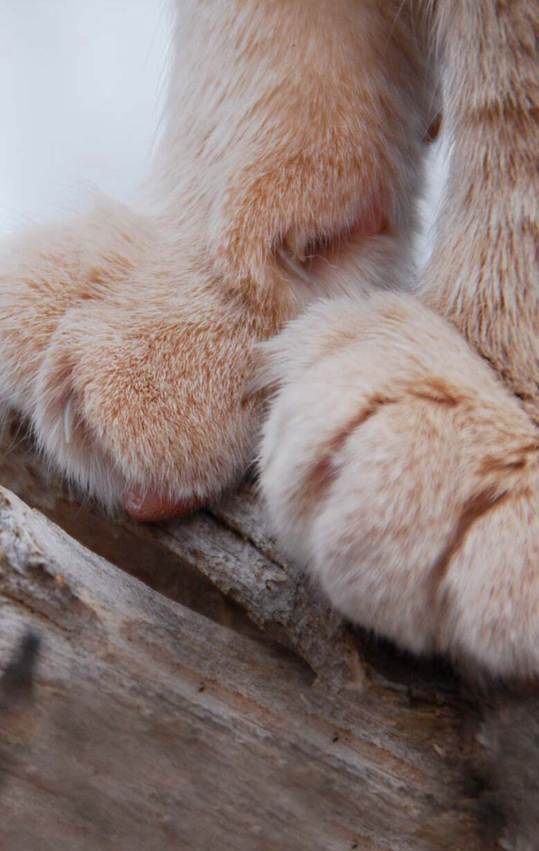 Something cute Cat paws, Cute cats, Free cats