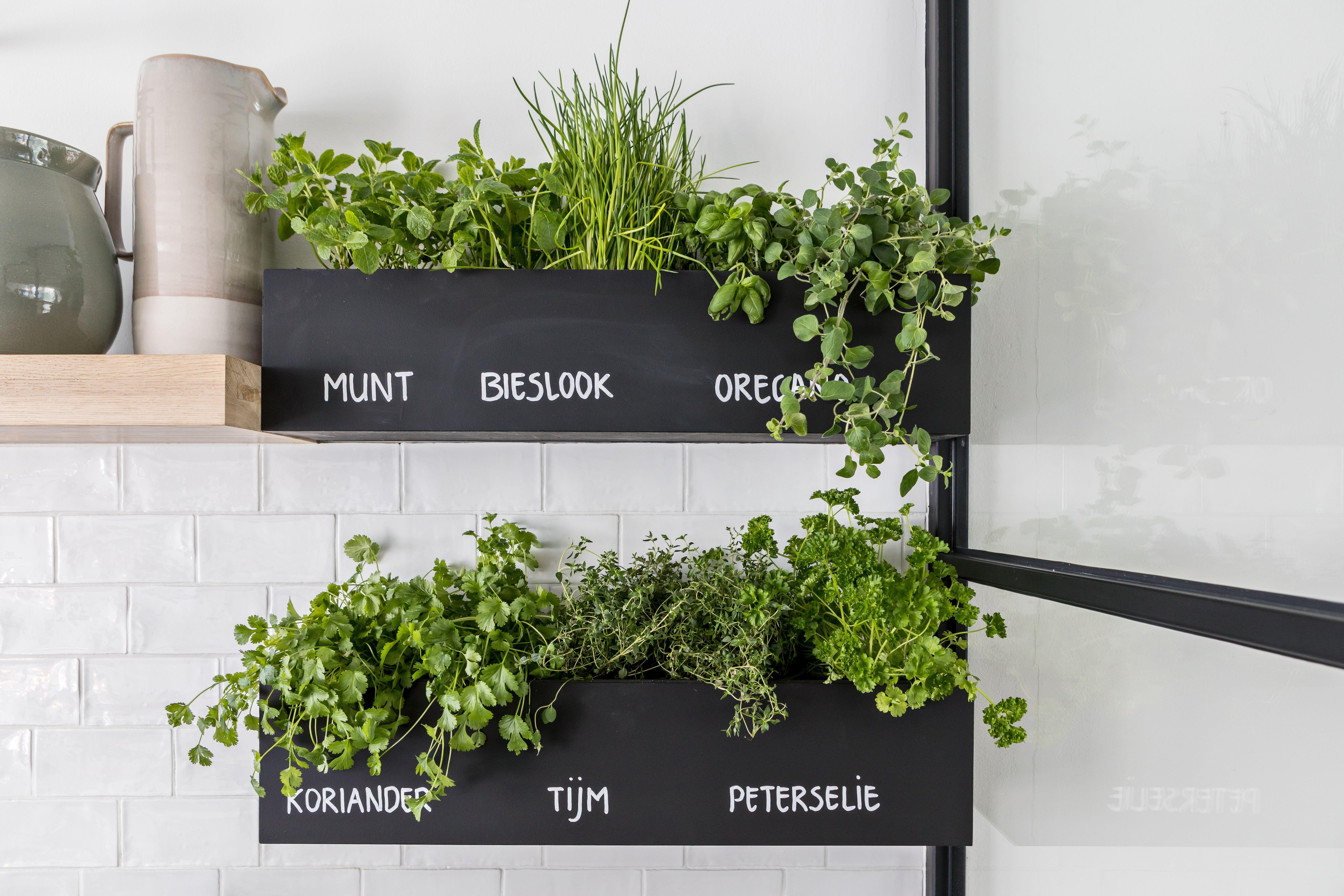 Pin Von Alejandra Kessler Auf Interior In 2020 Krauterwand Pflanzen Kuche Aufbewahrung Ideen