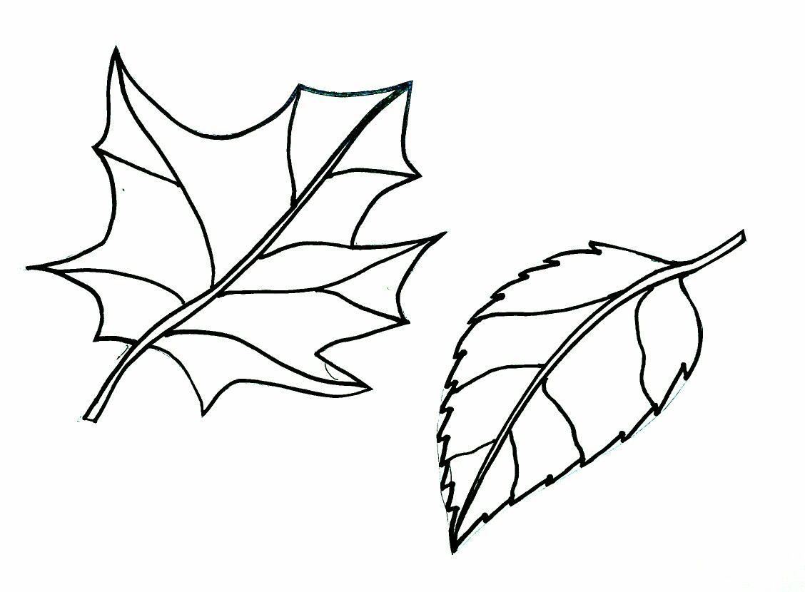 Fall Leaf Color Page Bulletin Board Window Leaf Template