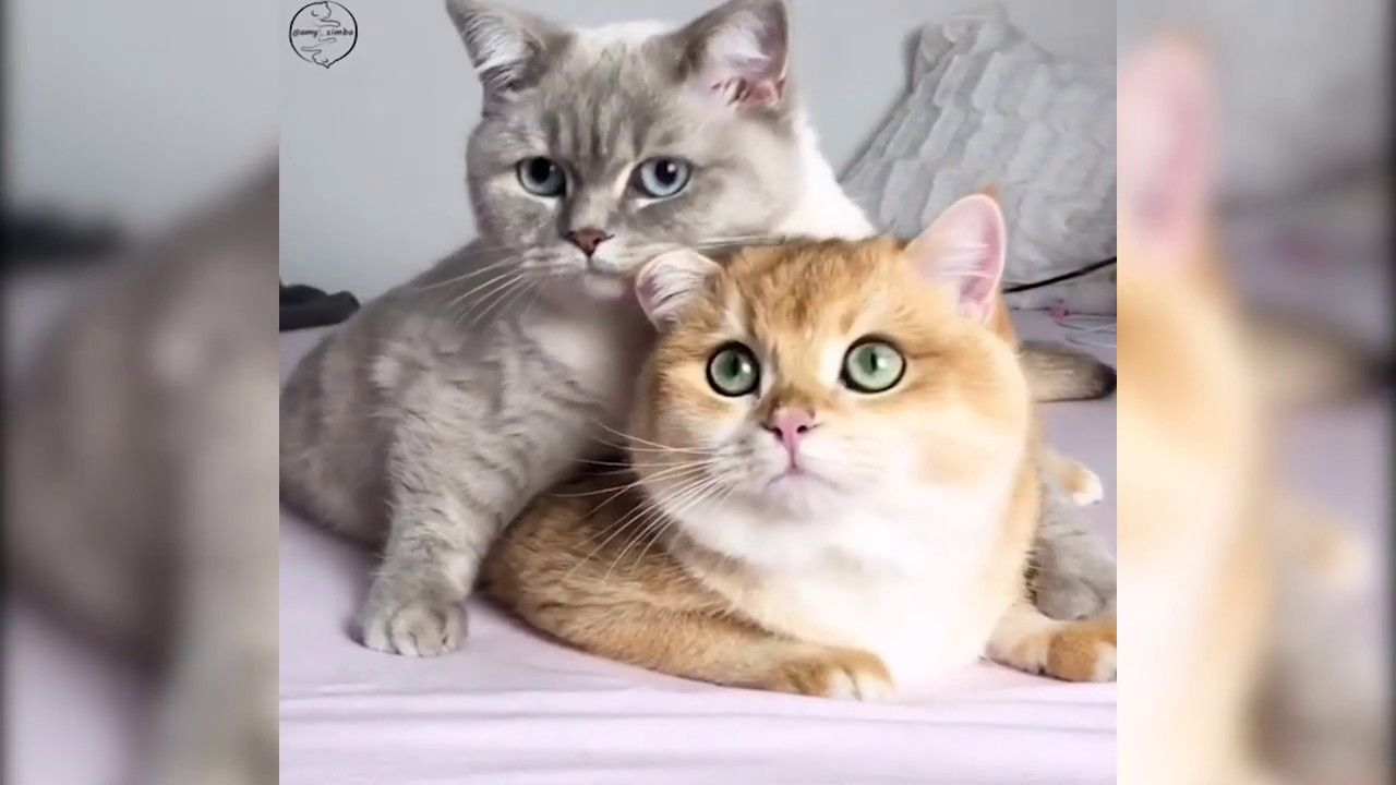 Adorable Cats And Rabbits Funny And Cute Pets Pets Life Yt In 2020 Cute Animals Pet Life Cute Cats