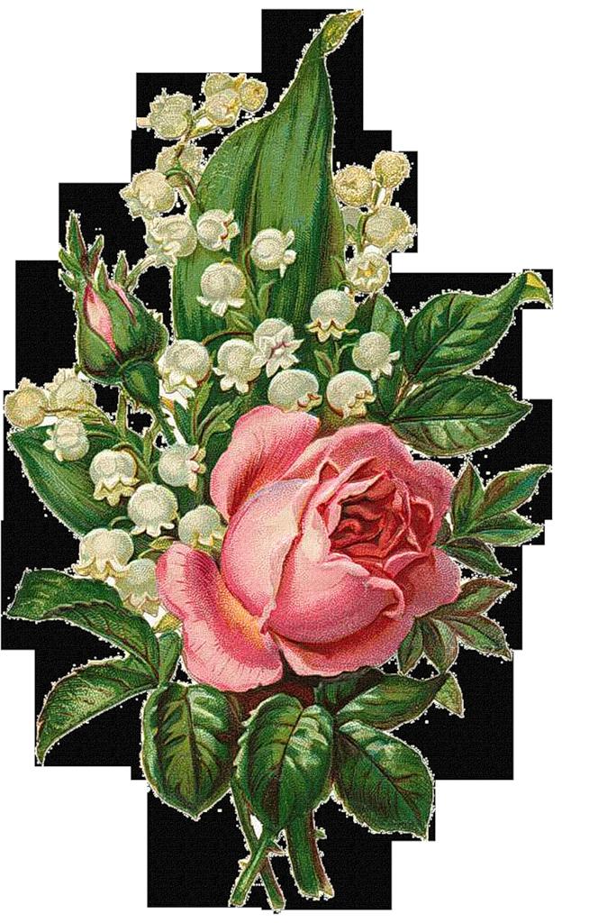 какая рисунки открытки с цветами раздвинул ноги