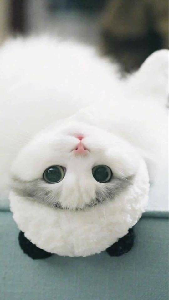 Pin by manar salah on cat ️ in 2020 Cute baby animals