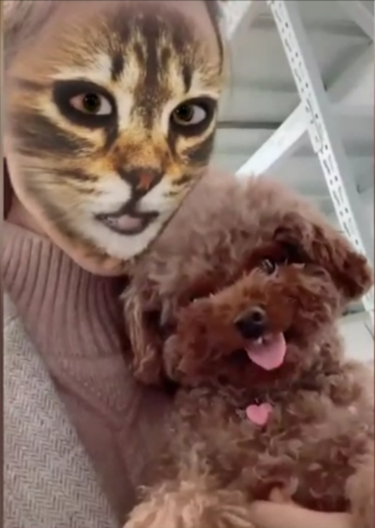 The Dog Squad Reaction To Cat Face Filter Tik Tok 2020 Comp Cat Face Funny Dog Videos Cat Face Mask