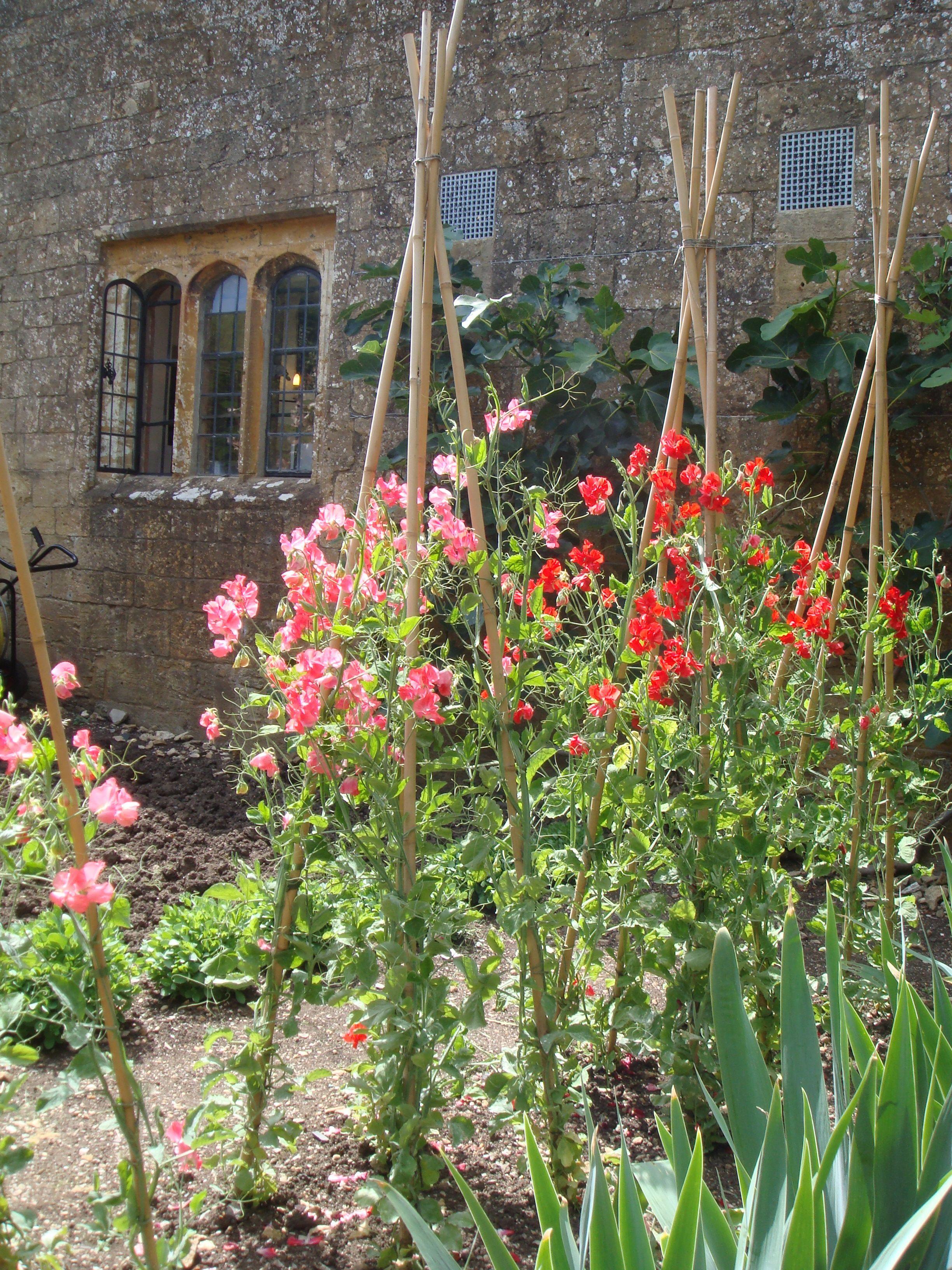 Highclere Castle Kitchen Garden Sweet Peas
