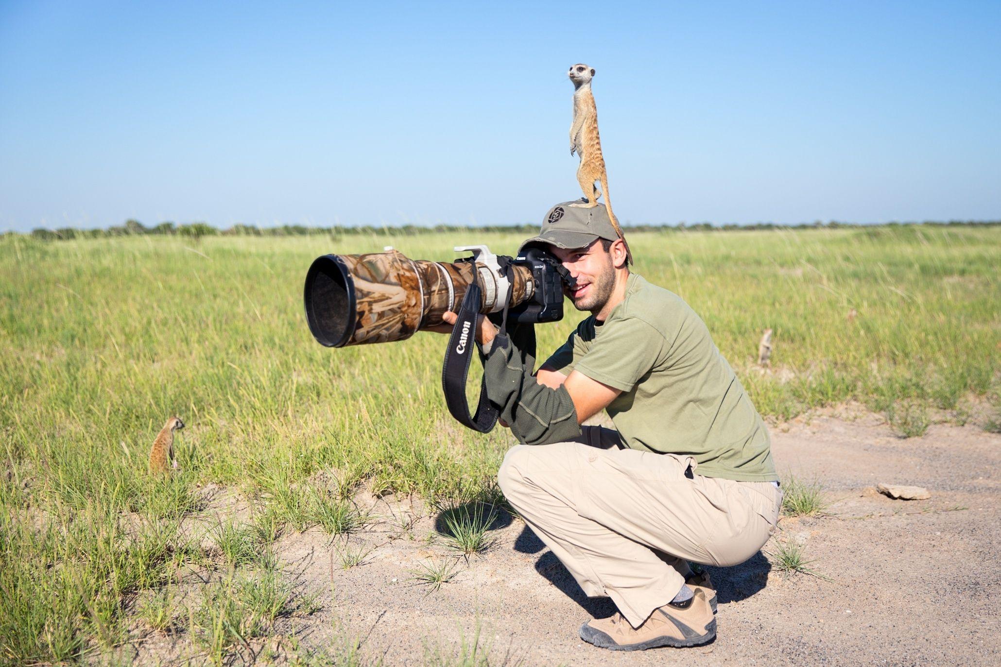 Baby meerkats in Botswana - in pictures