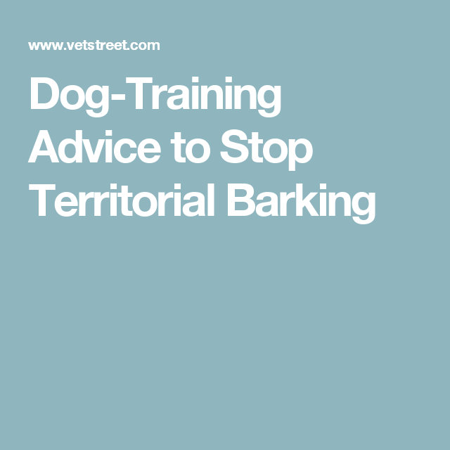Dog-Training Advice to Stop Territorial Barking