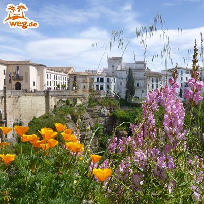 http://blog.weg.de/team-tipp-andalusien/: Unsere Werkstudentin Amelie hat Andalusien etwas genauer unter die Lupe genommen. Was sie dort erlebt hat, gibt's im weg.de-Blog.