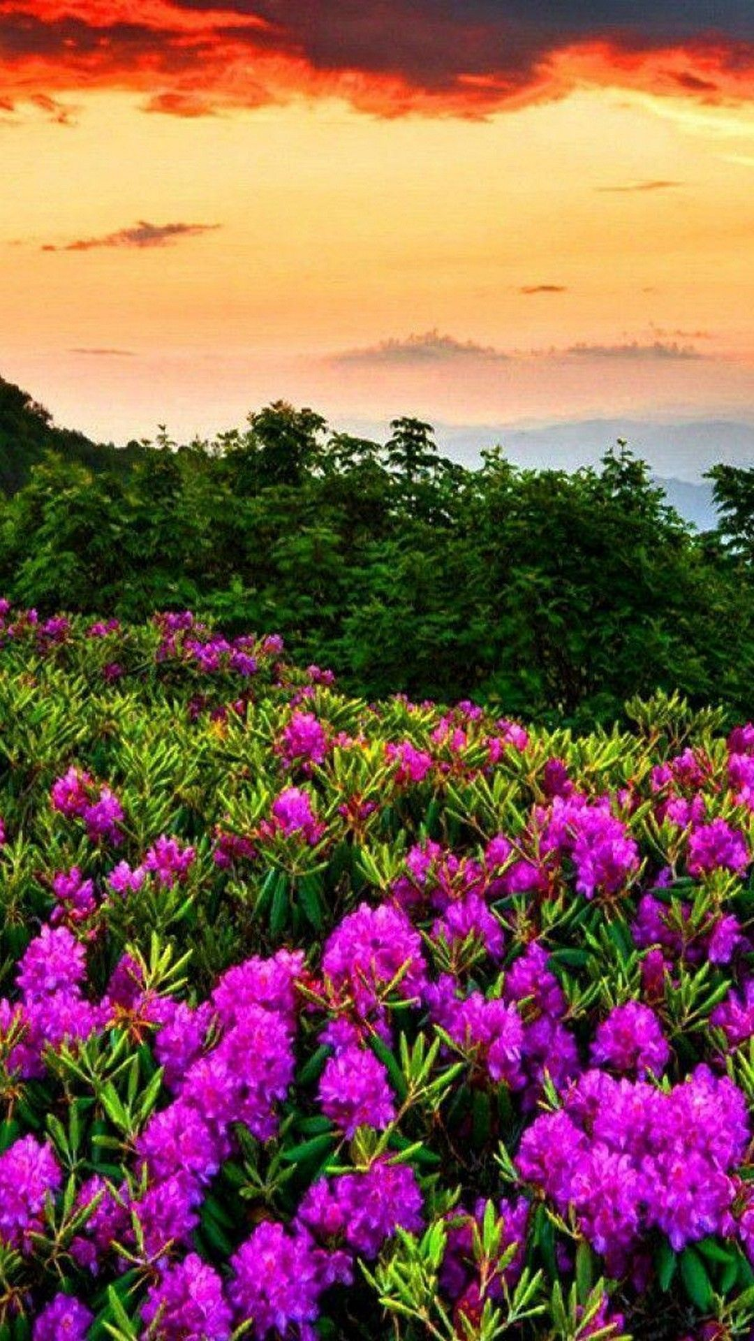 Android Wallpaper Spring Nature - Best Android Wallpapers ...