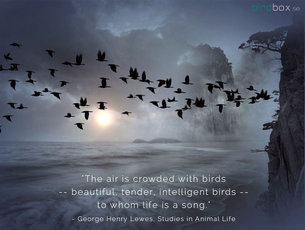 The Air Is Crowded With Birds Beautiful Tender Intelligent