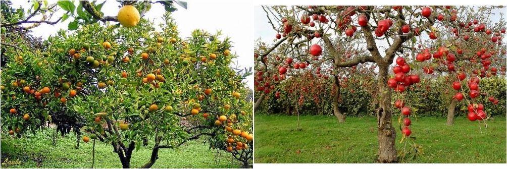 Si tienes frutales y quieres que den la mejor cosecha y luzcan preciosos debes leer la información que ÁRBOLES FRUTALES trae para nosotros. ¡Genial!