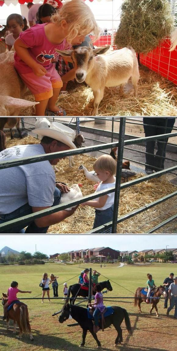 Fun Country Activities For Parties Mobile petting zoo