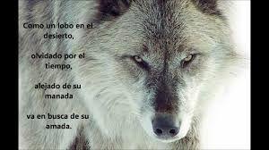 Resultado de imagen de frases de lobos de amor