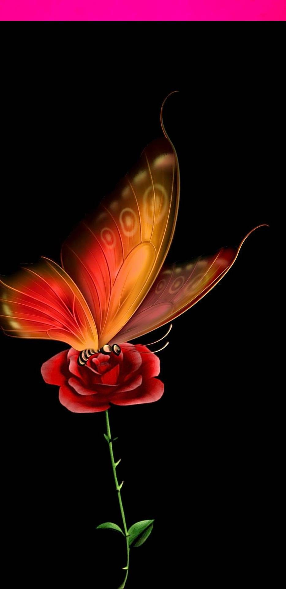 Pin By Dany On Pretty Images Butterfly Wallpaper Backgrounds Butterfly Wallpaper Iphone Butterfly Wallpaper