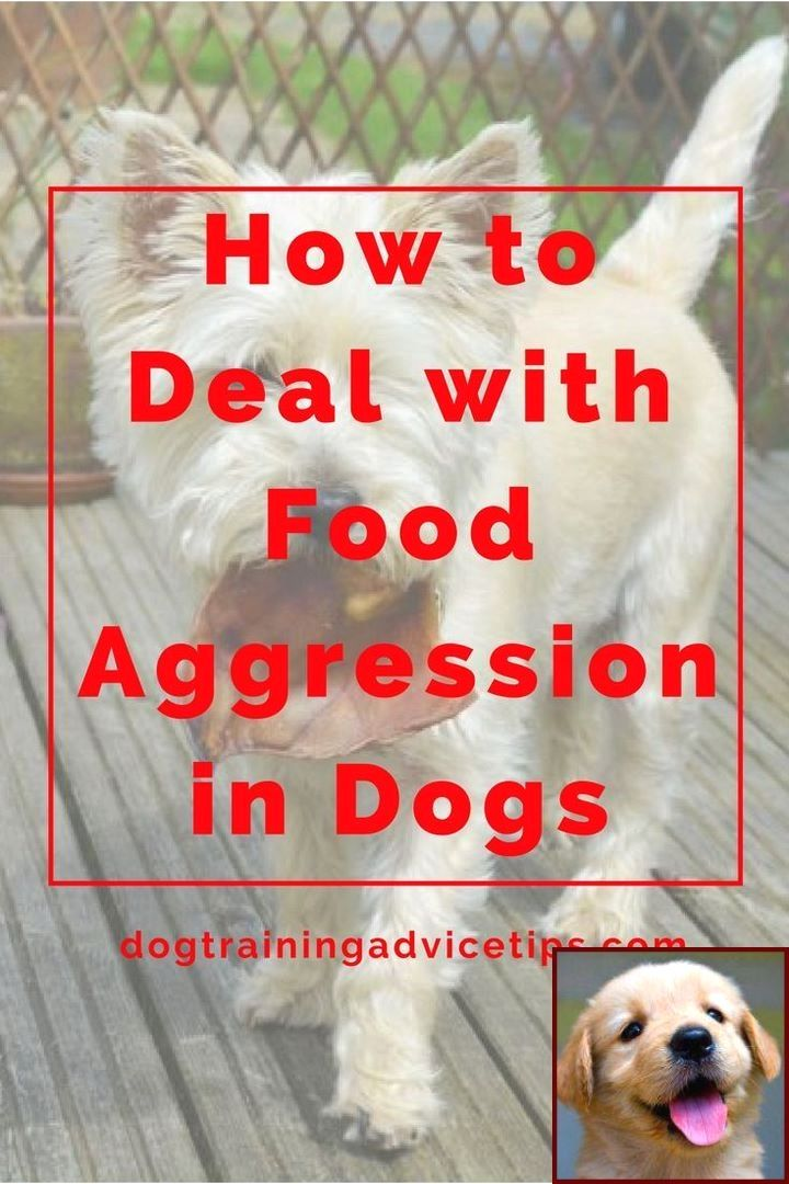 best dog training approach