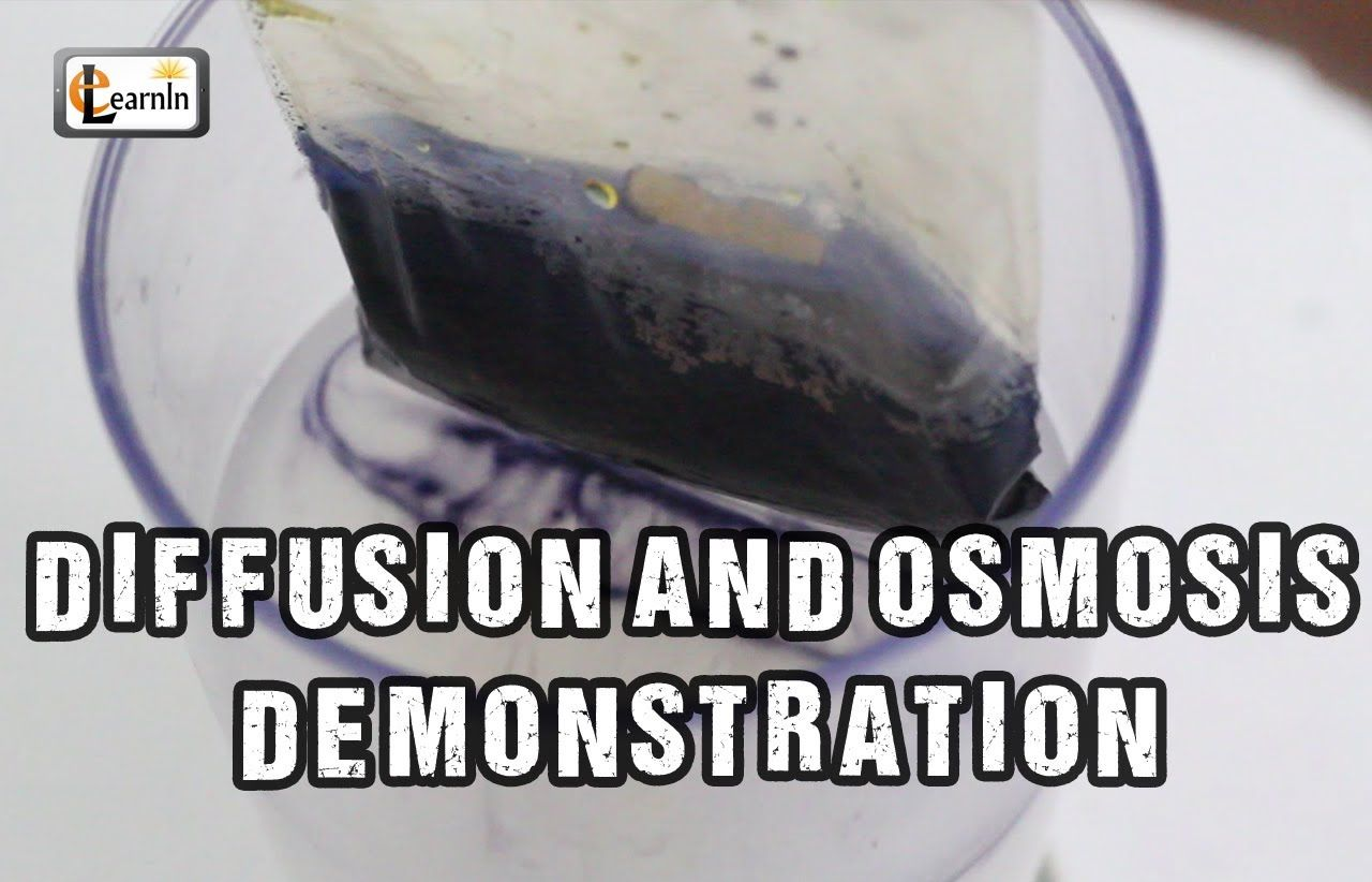 Diffusion and Osmosis Iodine starch experiment with bag