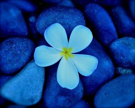 Pretty Flowers Pretty Flower With Pebbles Flower Stones