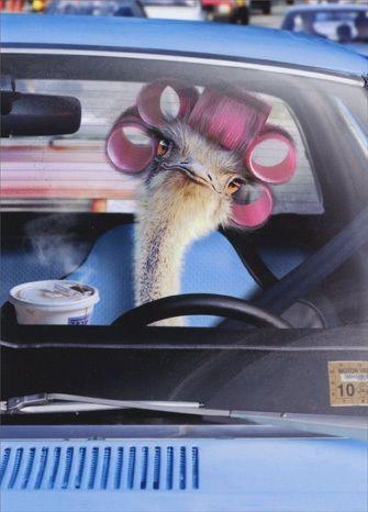 Avanti Press Ostrich Driving Car Belated Birthday Card Pinterest