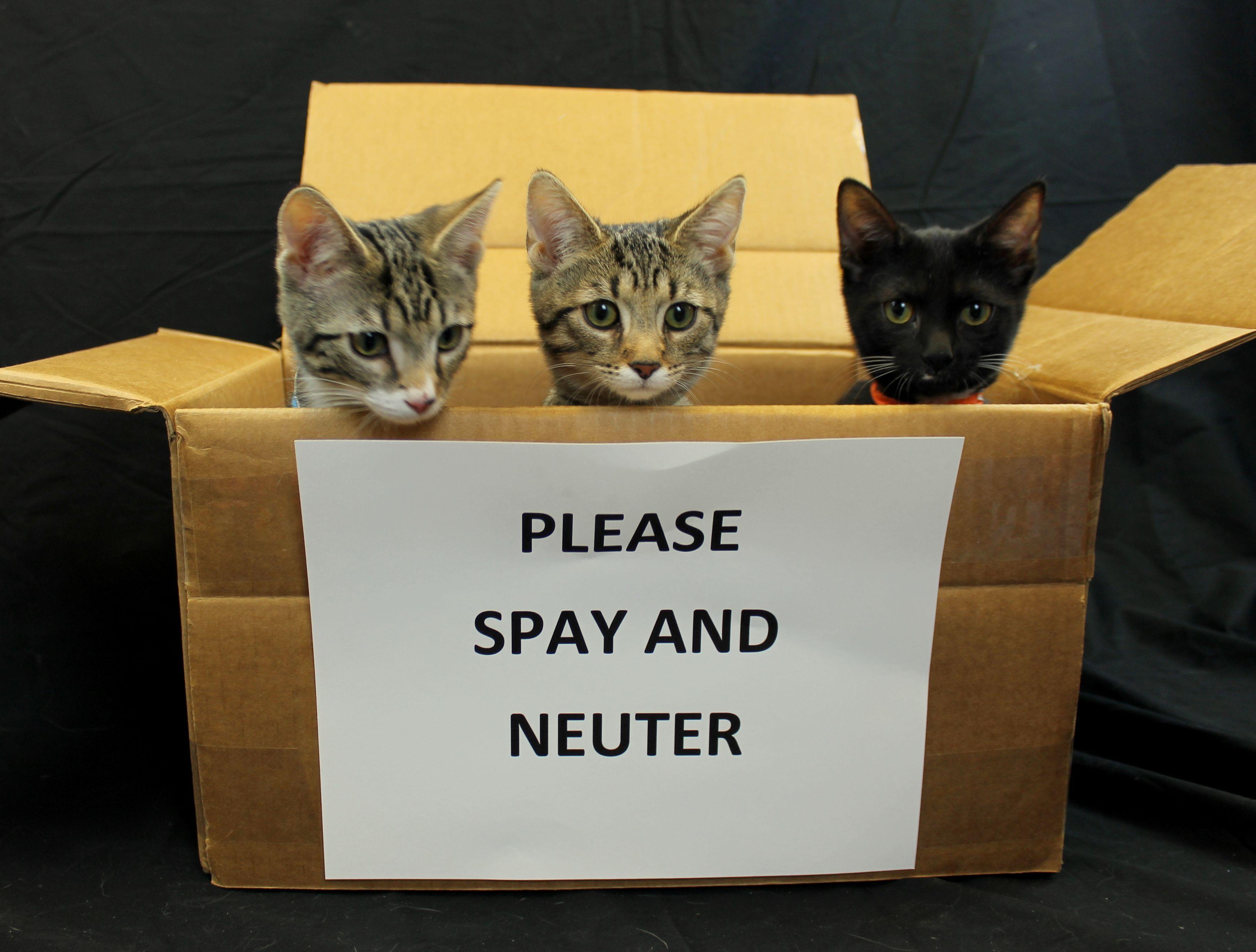 Spay and Neuter Animal hospital, Neuter, Pets