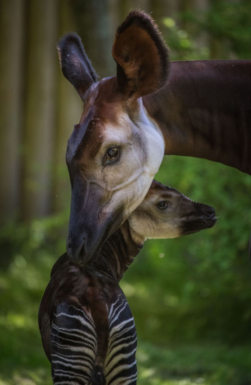 Chester Zoo S Top 10 Baby Animals Of 2018 Unusual Animals Animals Animals Wild