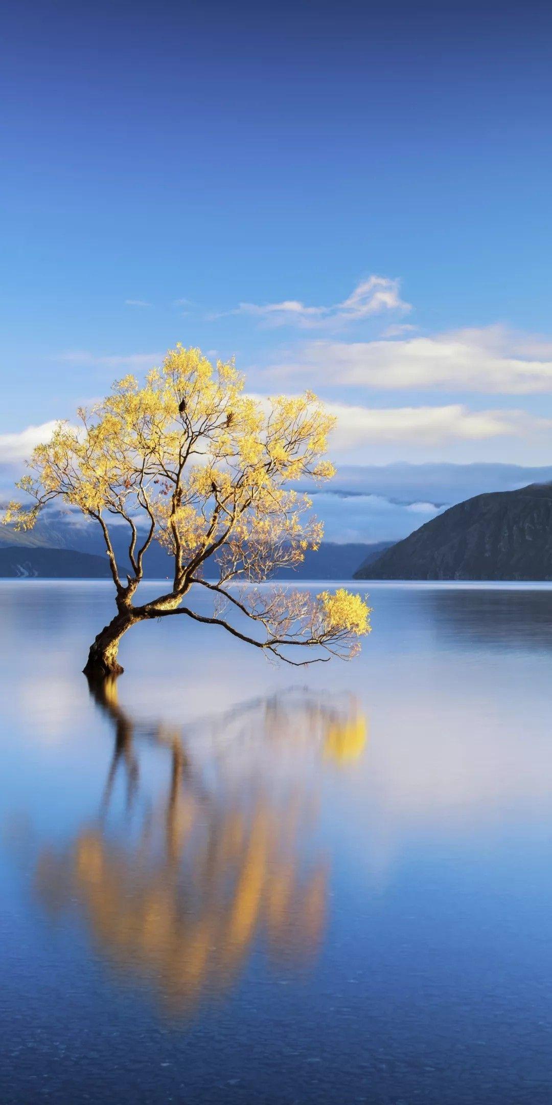 Wanaka Tree, New Zealand Travel the World in 2019